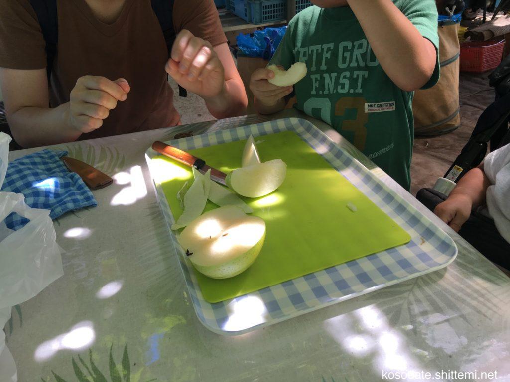 採りたての梨を食べる