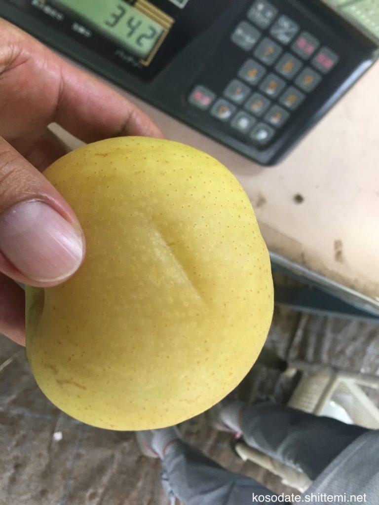 蜜症になった二十世紀梨