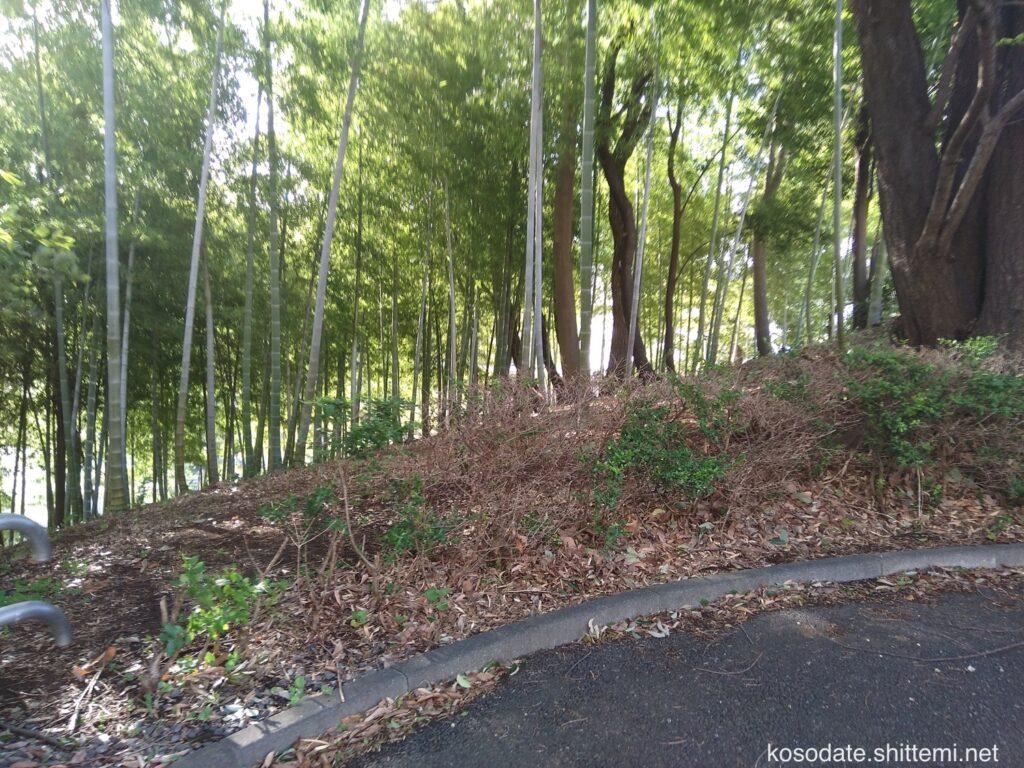 吾妻山公園 竹林