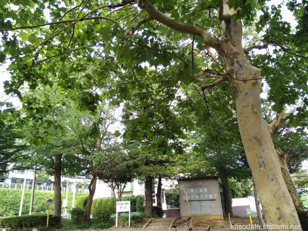 宮前平第2公園 木