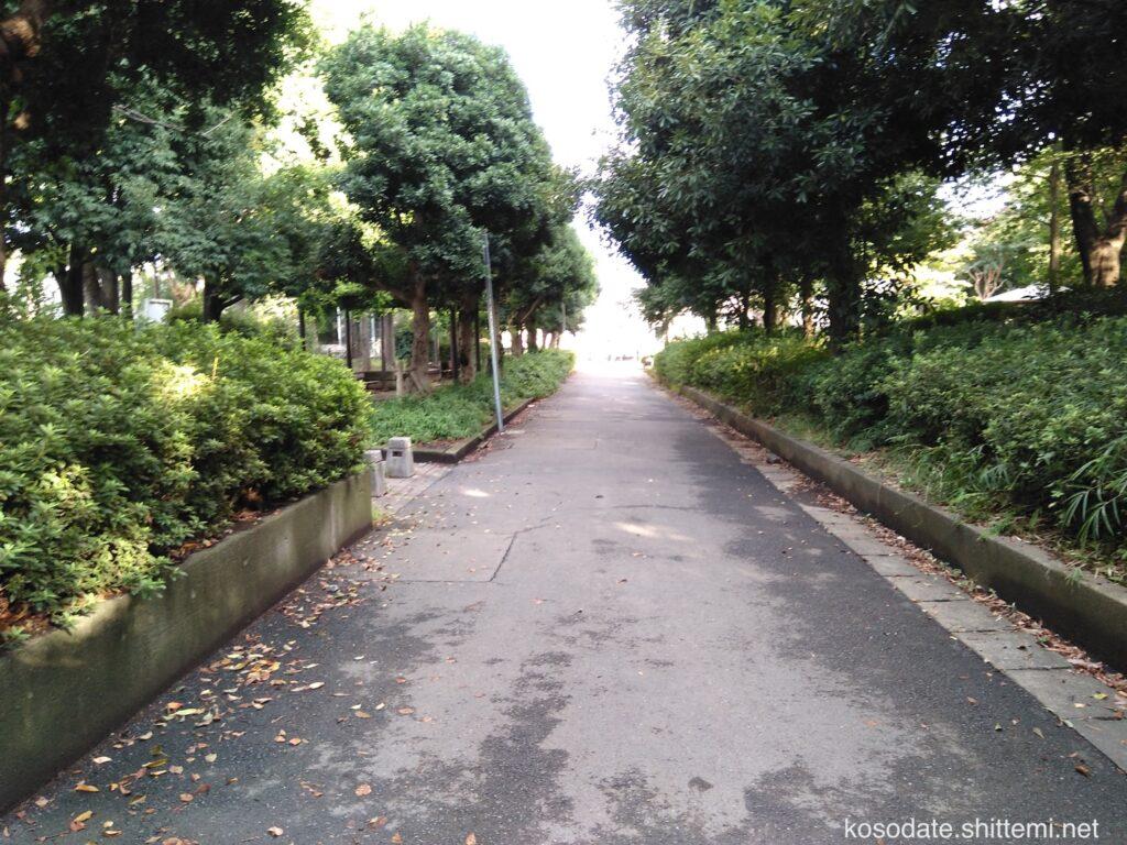 橘公園 水と緑の広場と自由広場の間の道路