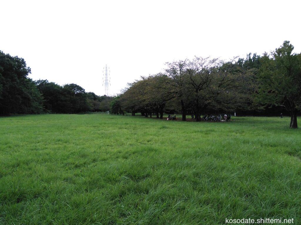 菅生緑地 草原