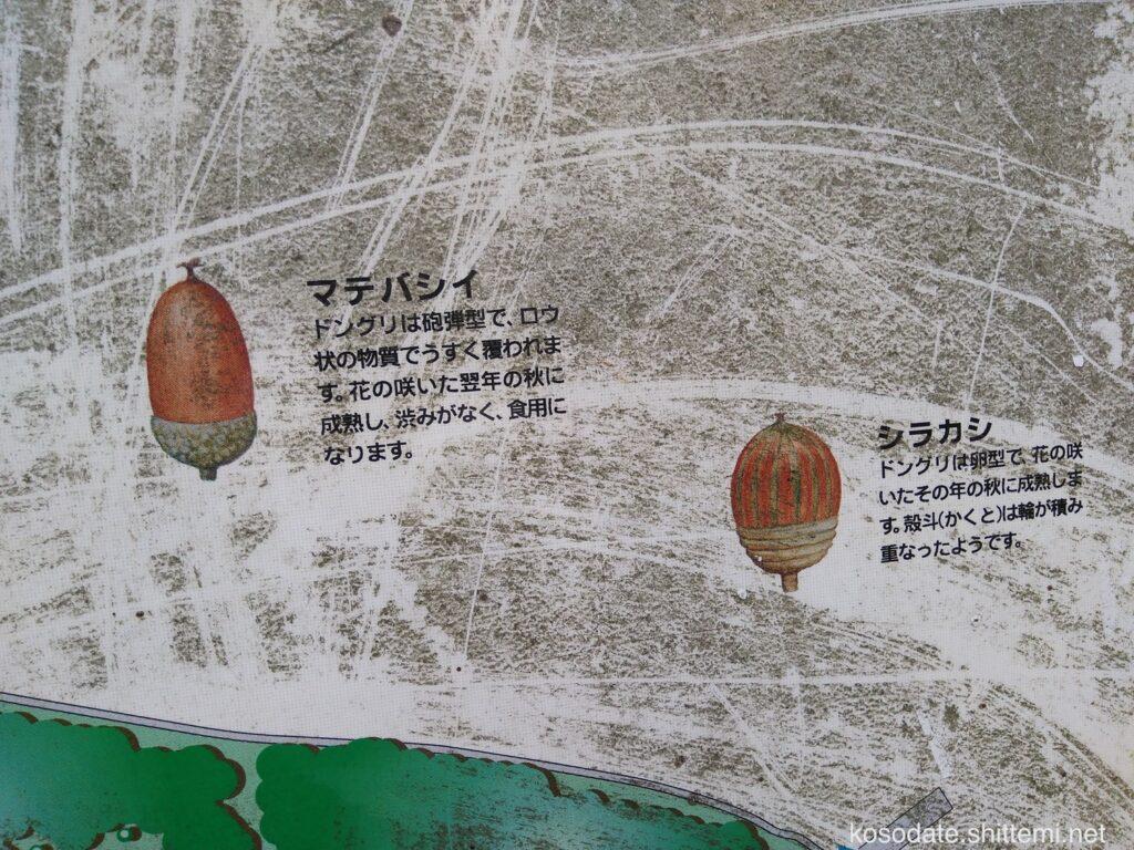 菅生緑地 看板 どんぐり案内